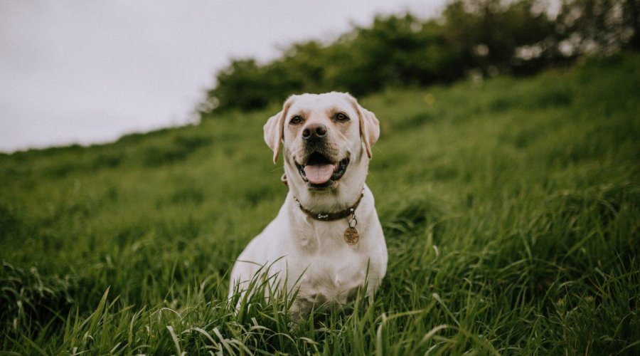 Therapy Animals – The Different Types and Their Benefits