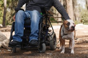 The Many Benefits of Service and Therapy Animals